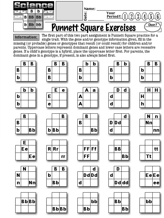 Punnett Square Practice Problems Worksheet Along With Punnett Square ...